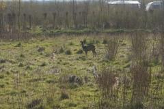 camping-zeeland-burgh-haamstede-56